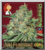 Expert Clinical White CBD Fem 5 Marijuana Seeds